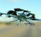 servizio riparazione cristalli auto